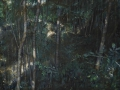 Stamm # 1.6-2011-tecnica mista su tela-80 x 100 cm..jpg