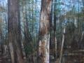 Stamm # 1.7 (Respiro)-2011-tecnica mista su tela-80 x 100 cm..JPG